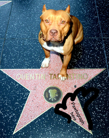Brandy Hollywood Star Pawtographed Picture by Sayuri. Official-authentic. LIMITED