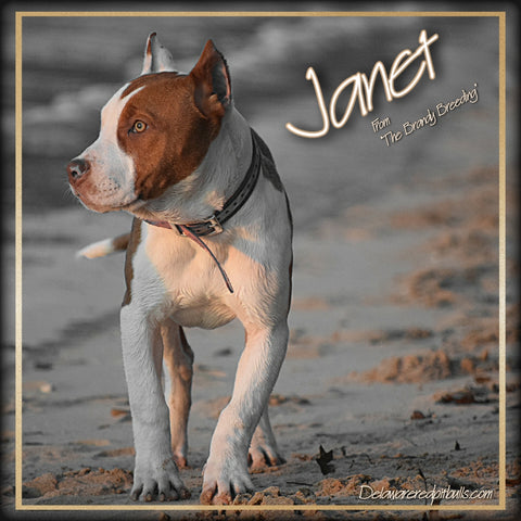 🎬 Janet from The Brandy Breeding 🎬 Female
