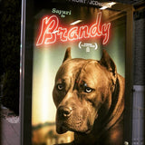🎬 Pussy Cat from The Brandy Breeding 🎬 Female