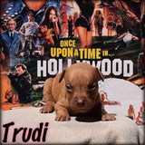 🎬 Trudi from The Brandy Breeding 🎬 Female