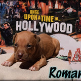 🎬 Roman from The Brandy Breeding 🎬  Male