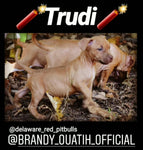 "🎬 Trudi aka little Brandy from ""The Brandy Breeding"" 🎬 Female"