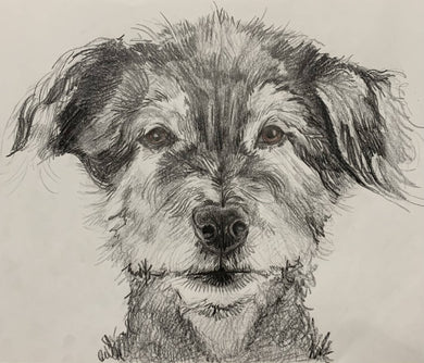 "Custom Pet Portrait 8""x10"""