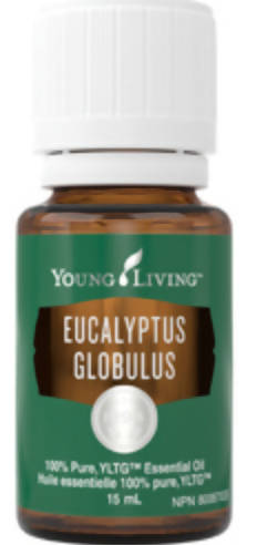 Young Living Eucalyptus Globulus Essential Oil 15 ml