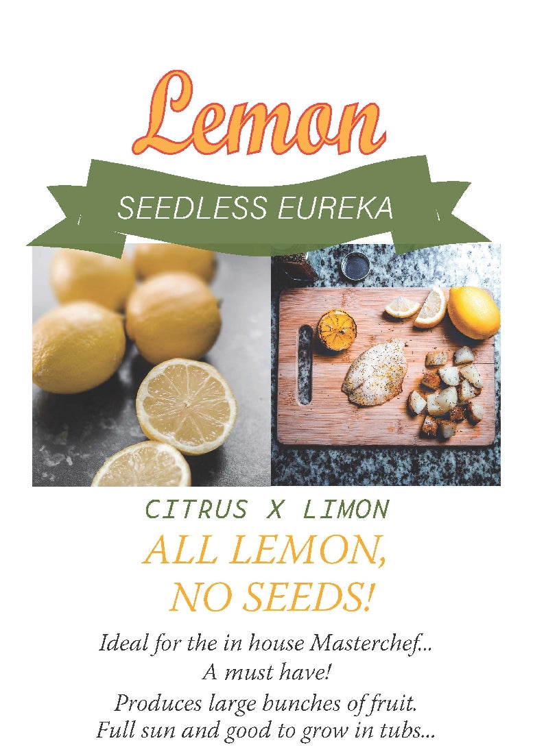 LEMON SEEDLESS EUREKA 20 CM