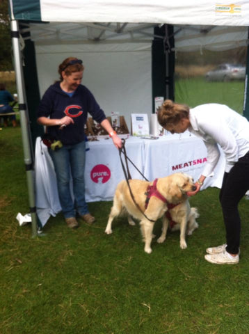 The Great Irish Dog Walk 2013