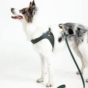 Leash Leather Pine Green
