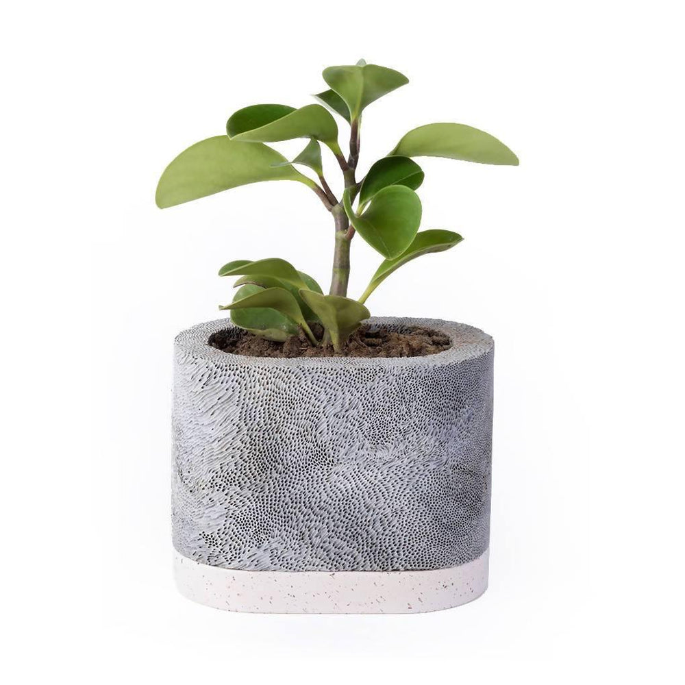 Ocean Planter - Oval w/ base