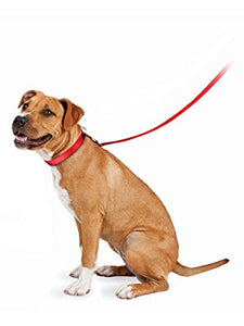 pet's collar or harness effortless