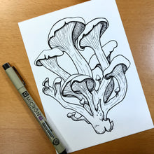 "Load image into Gallery viewer, Oyster Mushroom - PNW Fungi Inspired Original Ink Illustration, 5""x7"""
