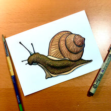 Load image into Gallery viewer, Snails Pace - Original Watercolor & Ink Illustration
