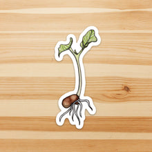 Load image into Gallery viewer, Kidney Bean Sprout - Seed Inspired Watercolor - Vinyl Die Cut Sticker