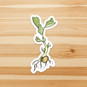 Garbonzo Bean Sprout - Seed Inspired Watercolor - Vinyl Die Cut Sticker