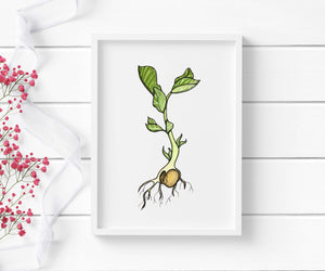 Garbonzo Bean Sprout - Garden Inspired Watercolor - Art Print