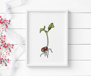 Kidney Bean Sprout - Garden Inspired Watercolor - Art Print