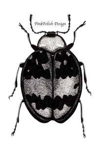 Beetle Bug - Entomology Inspired Ink Drawing - Art Print