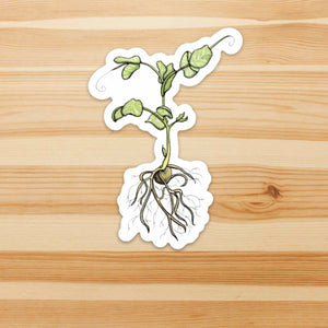 Pea Sprout - Seed Inspired Watercolor - Vinyl Die Cut Sticker