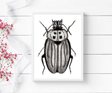 Load image into Gallery viewer, Beetle Distraction - Entomology Inspired Ink Drawing - Art Print