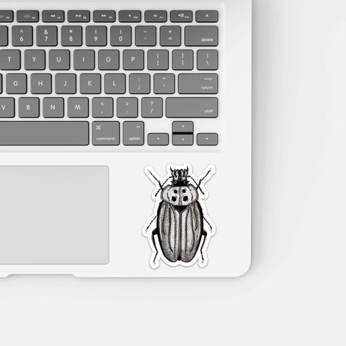 Beetle Distraction, Insect Inspired Ink Drawing - Vinyl Die Cut Sticker