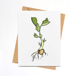 Garbanzo Bean Sprout, Baby Plant Inspired Watercolor Print - Handmade Note Card