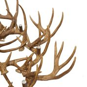 Load image into Gallery viewer, Antler Chandelier