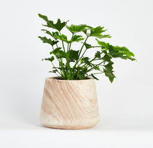 Load image into Gallery viewer, Artesia Wide Indoor Planter