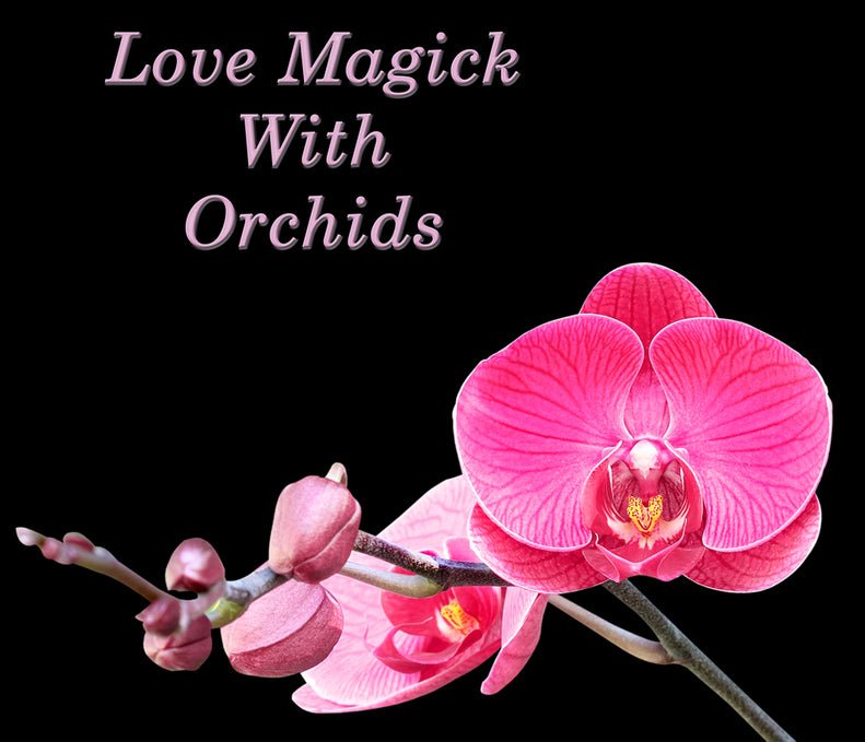 The Magic of Orchids in Wiccan Love Spells & Rituals
