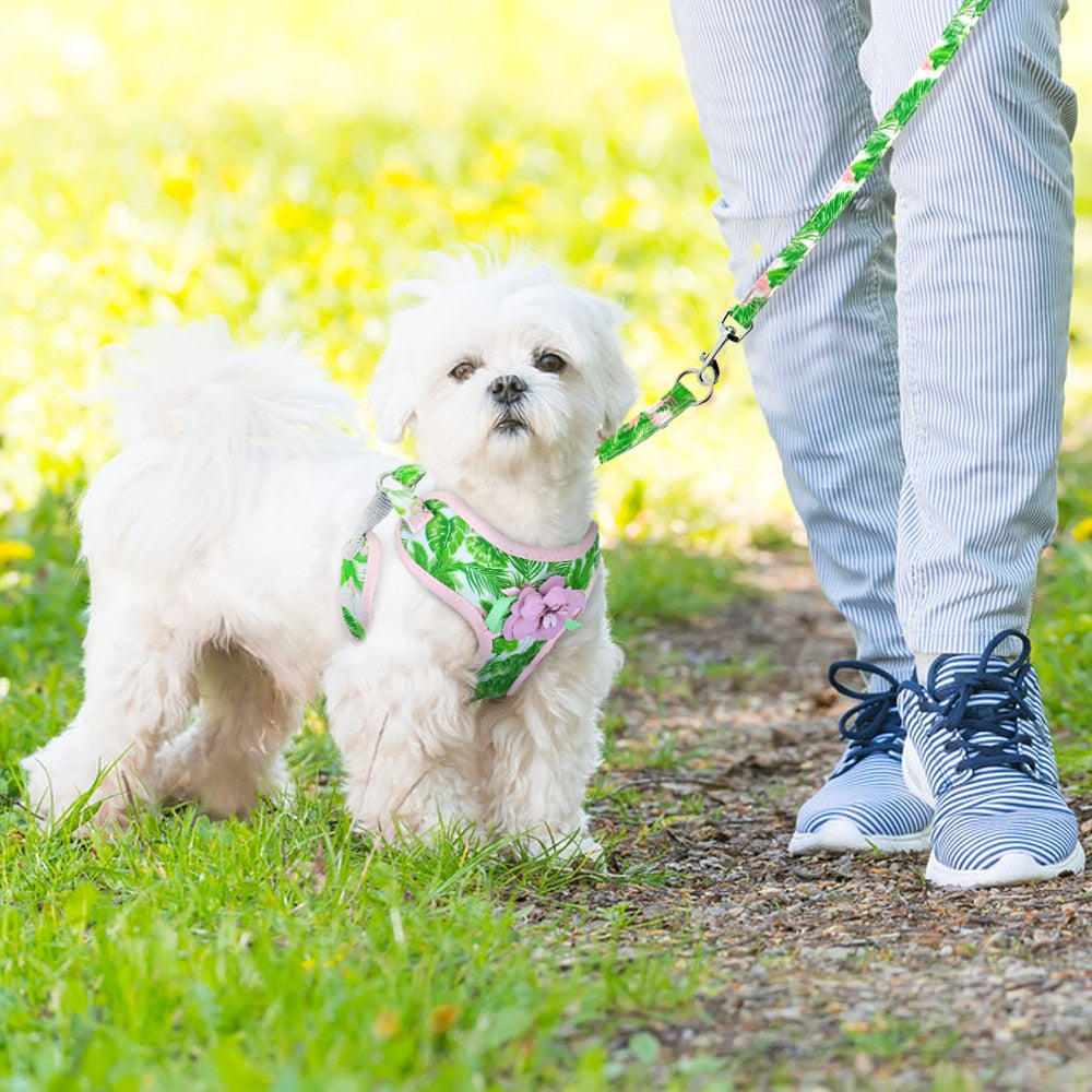 I'm Your Flower Breathable Dog Harness and Leash Set