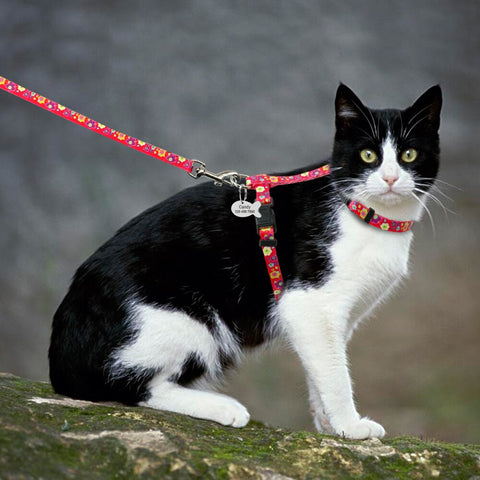 I'm Unique and Pretty Harness and Leash Set + ID Tag