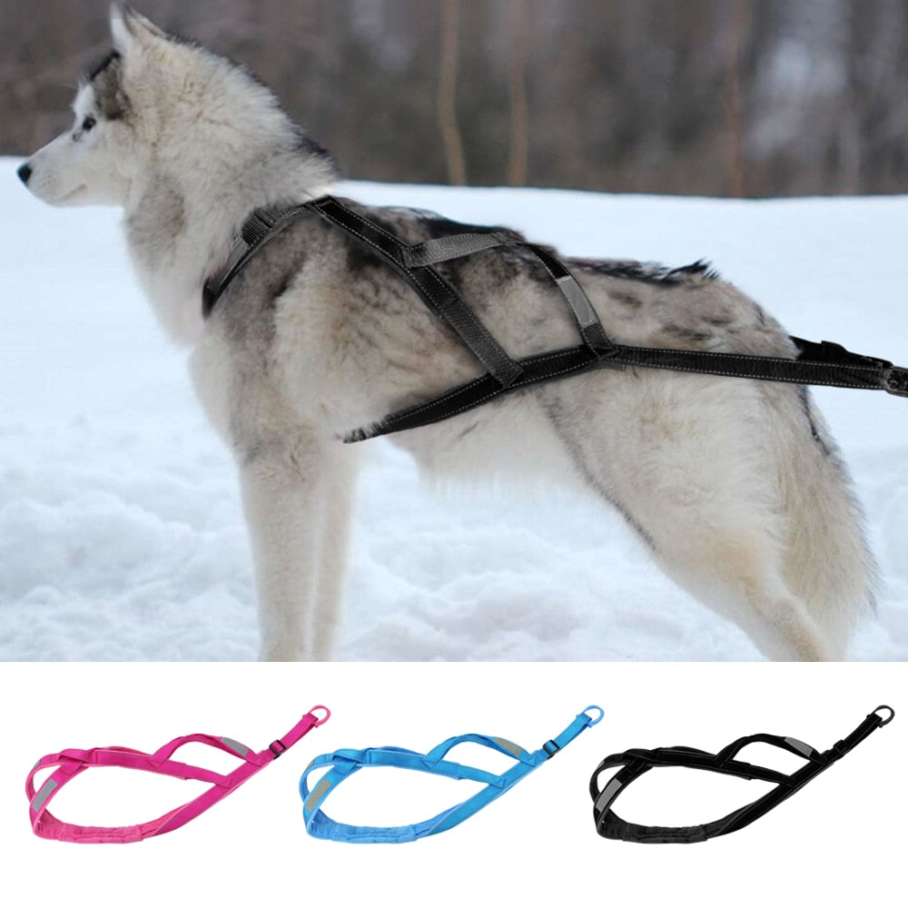 Let's Sled This Winter With This Reflective Harness