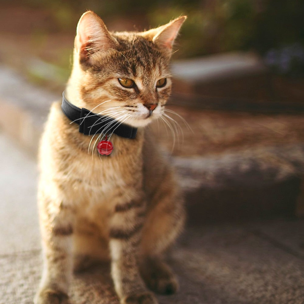 Bowknot Cat Collar