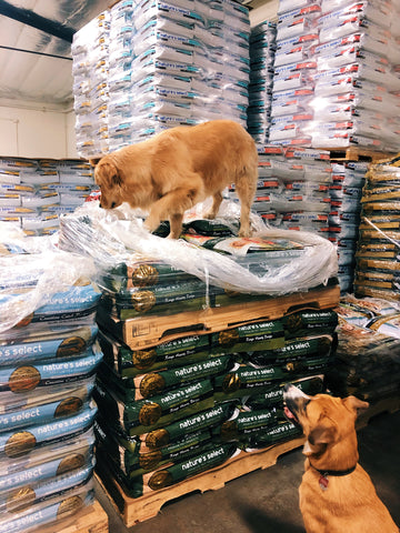 Pet Food Stock - Plenty