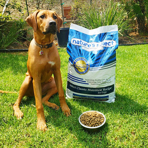 Nature's Select Dog with Pet Food
