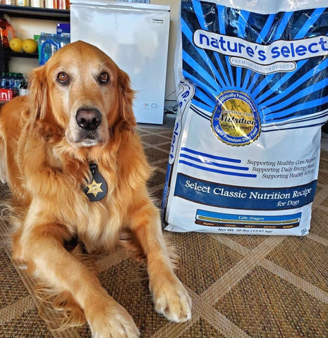 Henry the Therapy Dog Golden Retriever with Bag of Dog Food