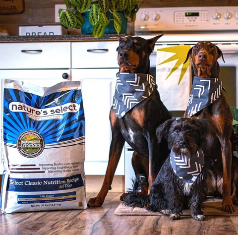 Pet Food Delivery