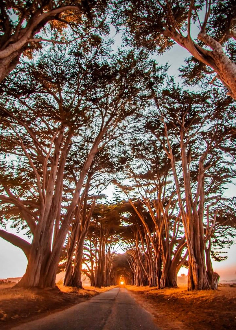 Point Reyes Tunnel of Trees