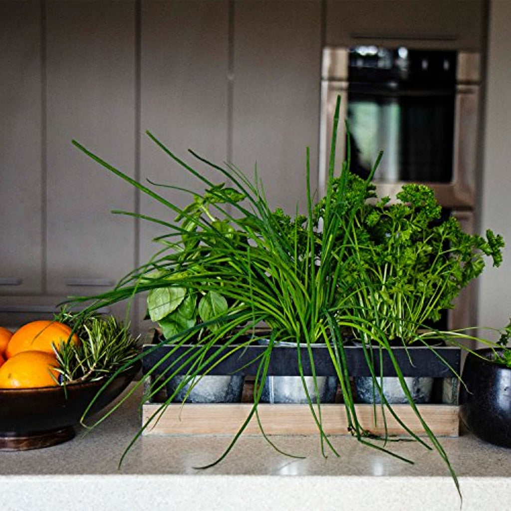 Indoor Herb Garden Kit