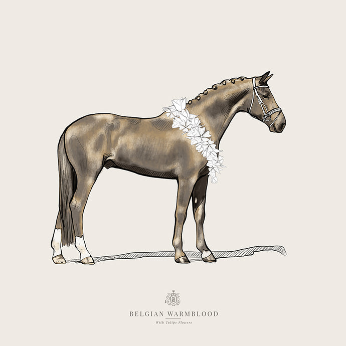 Belgian Warmblood | Equestrian Tribute Collection