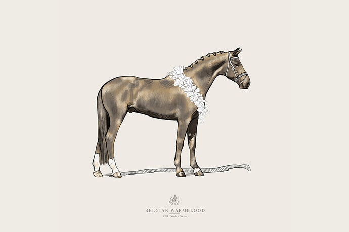 Belgian Warmblood | Digital Download