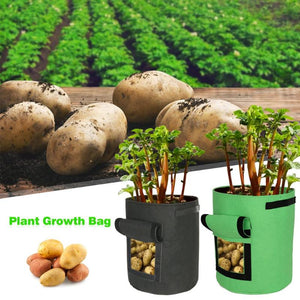Plant Growth Bag