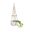 beauty plant hanger
