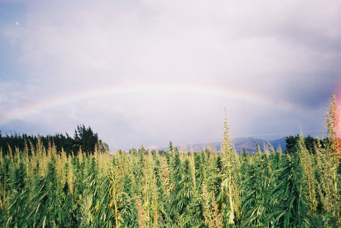 5 Reasons Why Hemp is Amazing for the Planet