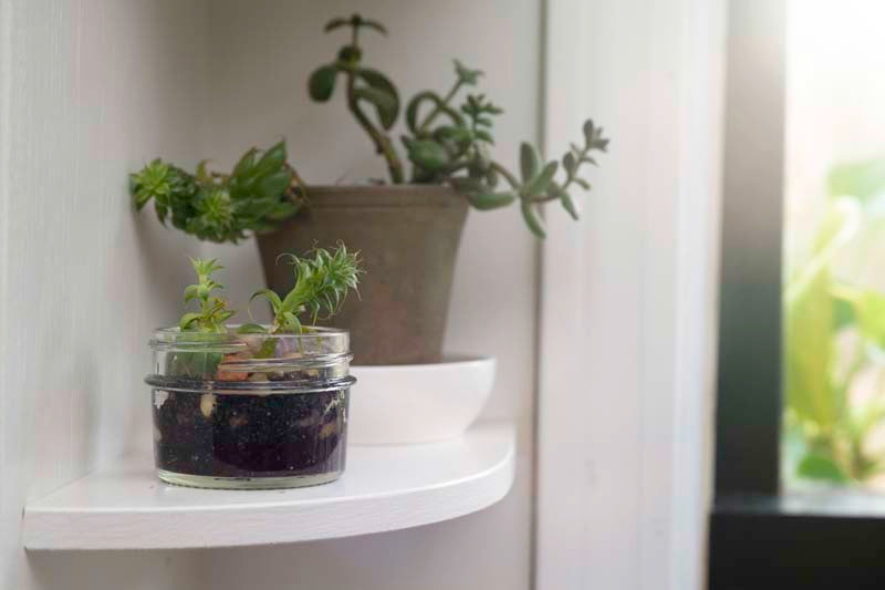 Using Nutreat Jars for Plants