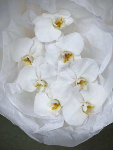 Flowers Gold Coast - Phalaenopsis Orchid - How to care for your Phalaenopsis Orchid