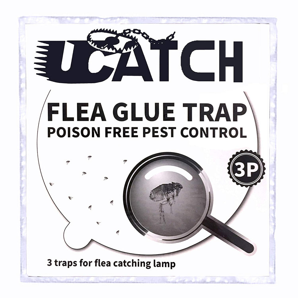 Photo of flea glue trap