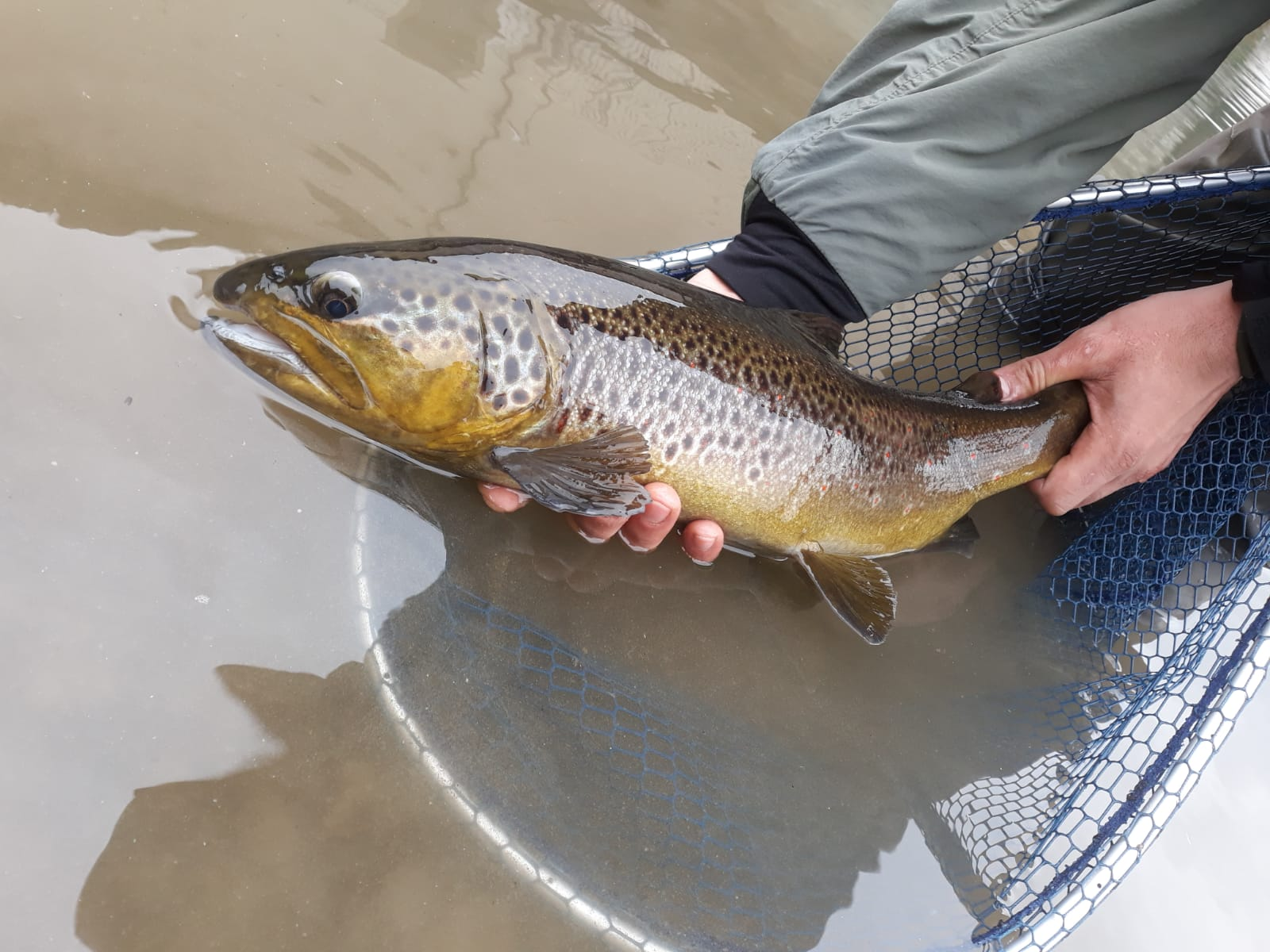 WHIELDON FLY FISHING NYMPH TROUT