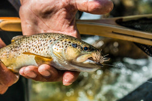 Dry Fly Casting retreat | With the Italian school of fly fishing - Whieldon Fly Fishing