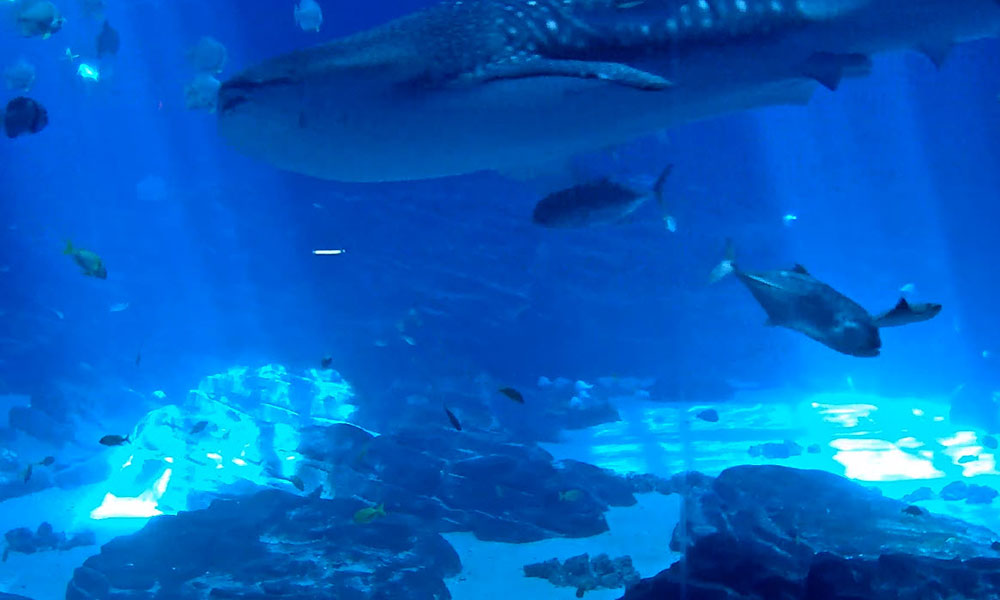 Georgia Aquarium Live Cams | Flashpacker Chronicles