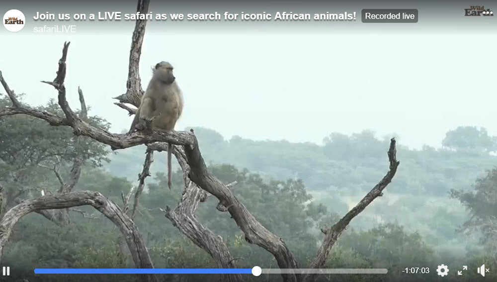 Wild Earth SafariLIVE | Flashpacker Co