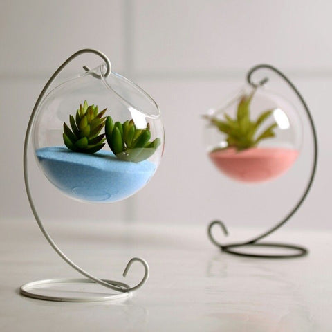 Flower Plant Clear Glass Vase Hanging Planter